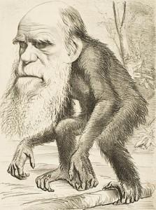 Caricatura de Darwin como un primate (1871)