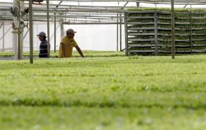 inmigrantes en el campo. (Fran Leonardo)