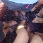 Pisada de uva de vino Volvoreta