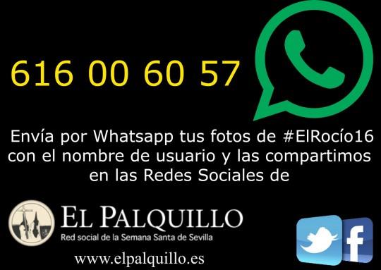 Whatsapp-logo-palquillo