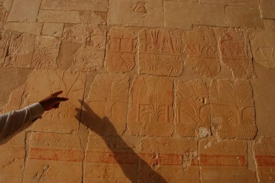 Las paredes hablan en el templo de Hatshepsut