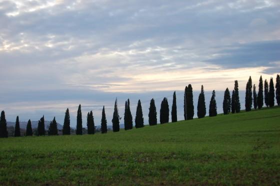 Cipreses en los campos de Toscana, entre Montalcino y Montepulciano