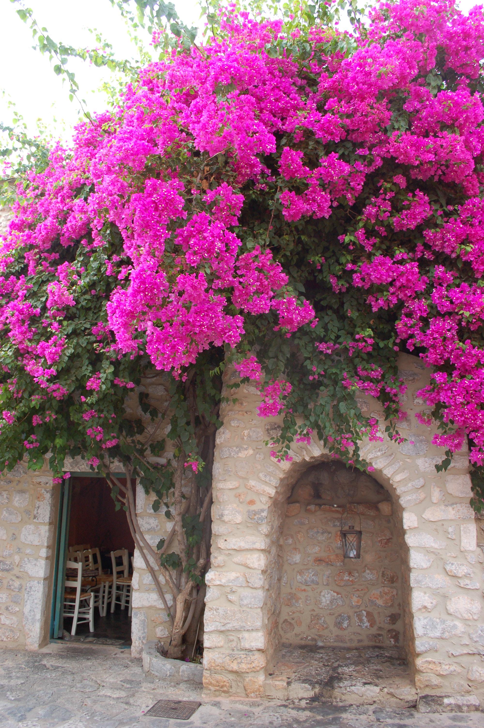 Mil sitios tan bonitos como c diz are poli - La buganvilla ...