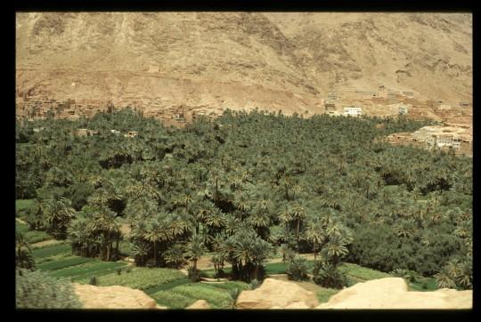 Este es un verdadero oasis.