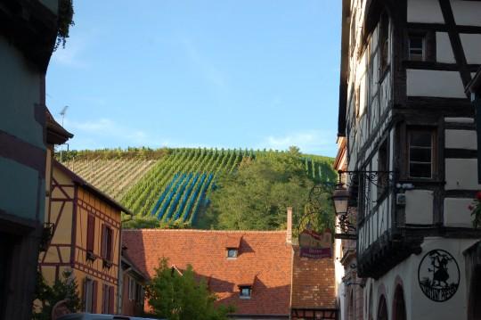 Las viñas que rodean Riquewhir, fuente de la riqueza del pueblo.