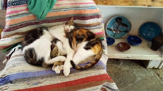 Habitantes de Manolates, echando la siesta.
