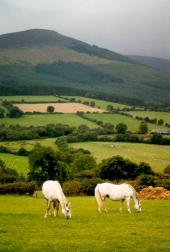 247_horses2.jpg